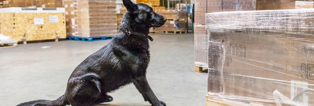 Dog Facilitates training for professional